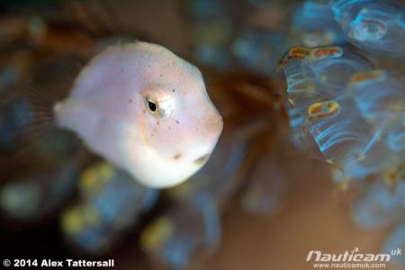 SoftieFilefish2